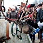 """Оленья ферма, новогодняя программа """"По следам Снежной Королевы"""""""